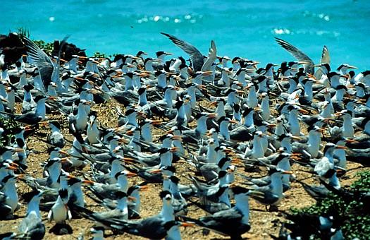 在南太平洋,澳大利亚、巴布亚新几内亚、所缤罗门群岛、新赫布里底群岛、新喀里多尼亚岛及南纬30度线间,有一个五彩缤纷的海,叫珊瑚海。珊瑚海北接所罗门海,南连塔斯曼海,面积近500万平方公里,是世界最大的海。它是太平洋的边缘海。这里曾是珊瑚虫的天下,它们巧夺天工,留下了世界最大的堡礁。众多的环礁岛、珊瑚石平台,像天女散花,繁星点点,散落在广阔的洋面上,因此,得名珊瑚海。   珊瑚海地处热带,水温终年在18-28间,这里风速小,海面平静,水质洁净,有利于珊瑚生长。它以众多的珊瑚礁而著名。这里,座落着世界最大