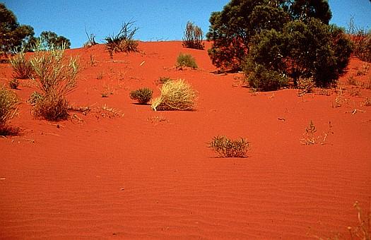 Gibson desert, Australia.