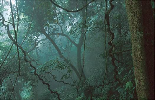 Montane tropical rain forest in north Vietnam. Dr. Zoltan Takacs.